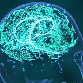 4 1 Learn More Brain